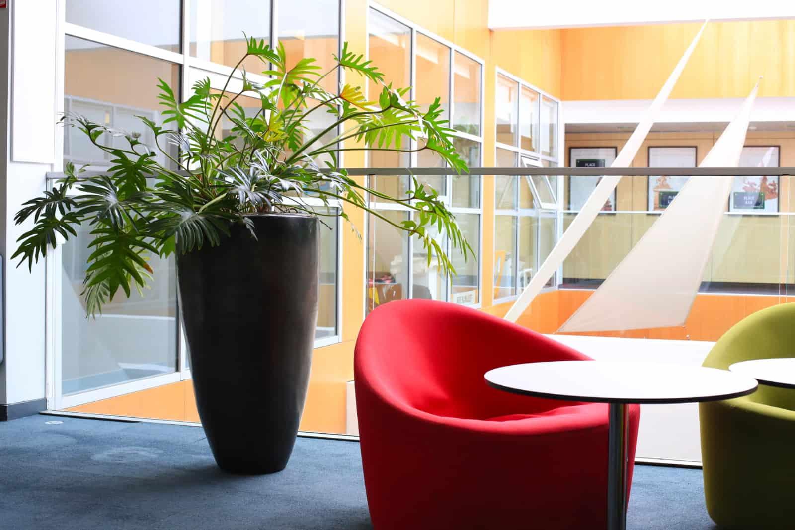 location de plantes pour entreprises à Paris et région - Green decor