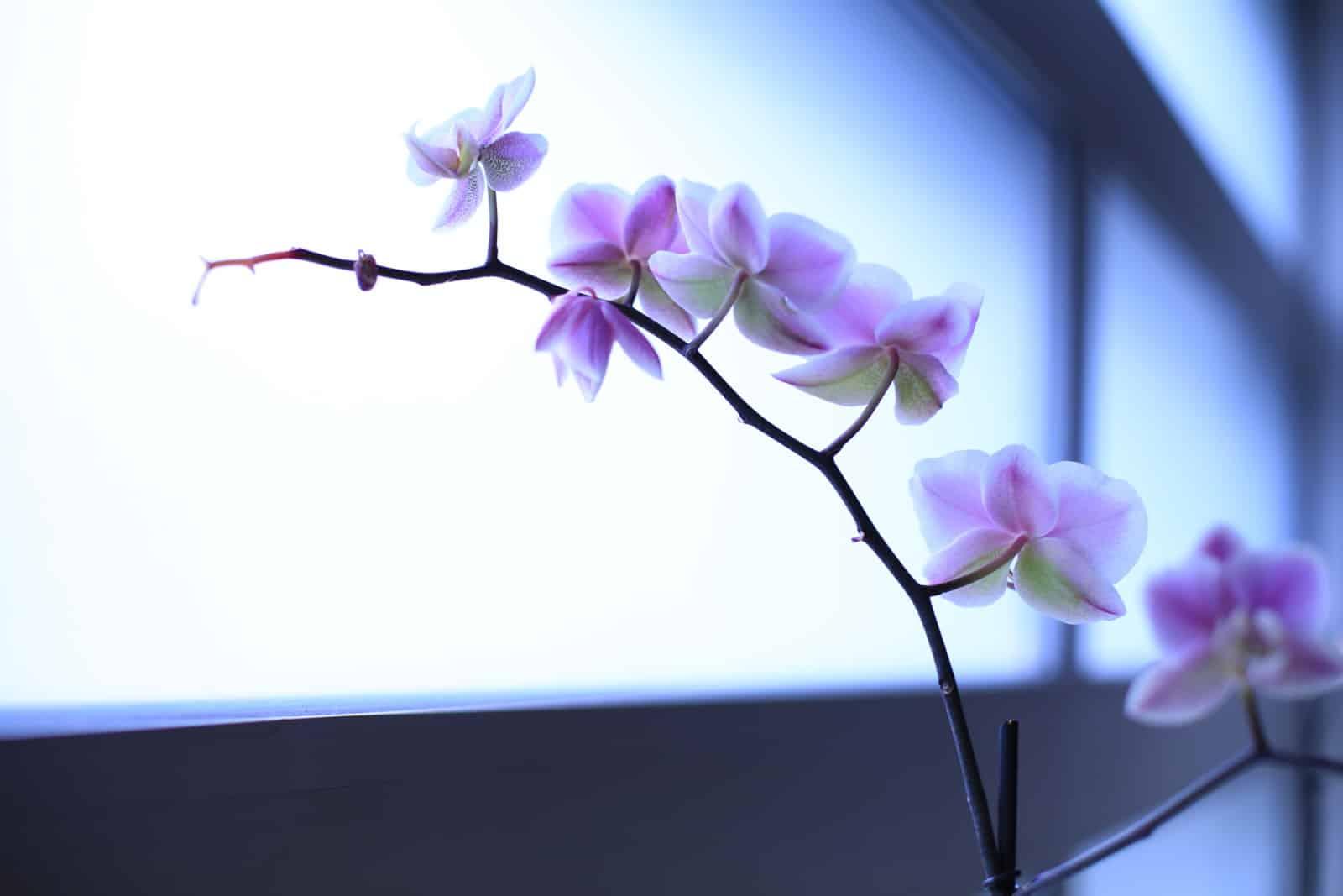 location de plantes et d'orchidées pour les entreprises