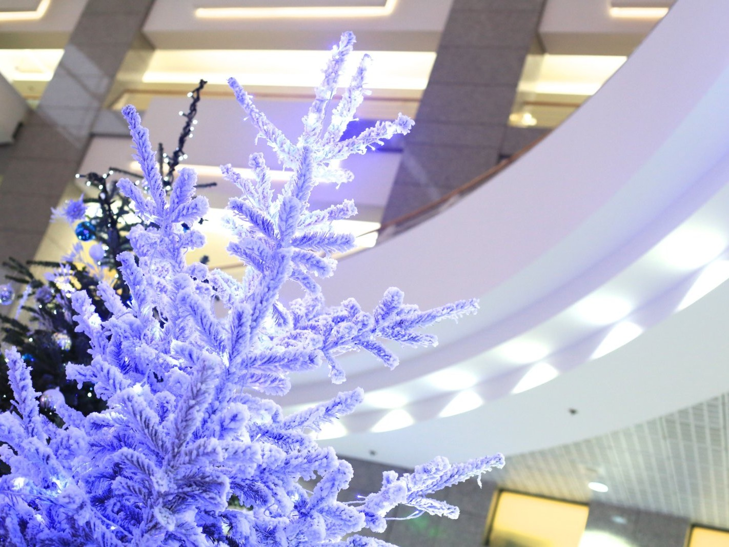 Décoration de Noël pour entreprise à Paris par Green Decor