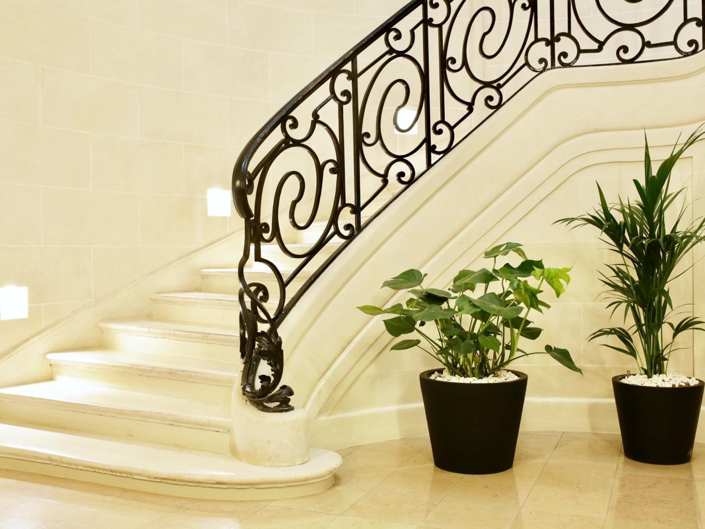 location de plantes pour les entreprises