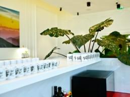 plantes vertes et design végétal en entreprise