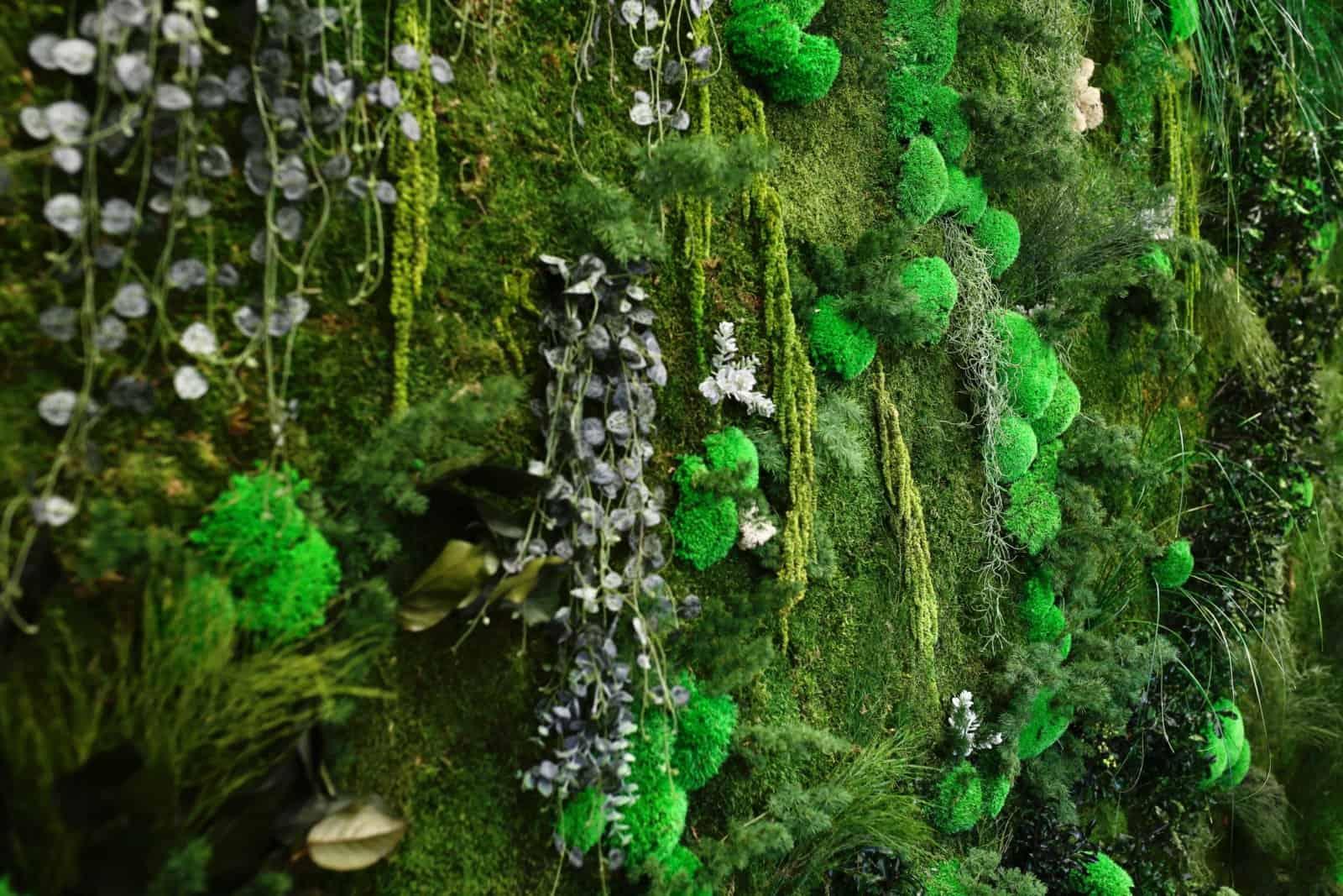 tableau végétal et mur végétalisé par Green Decor