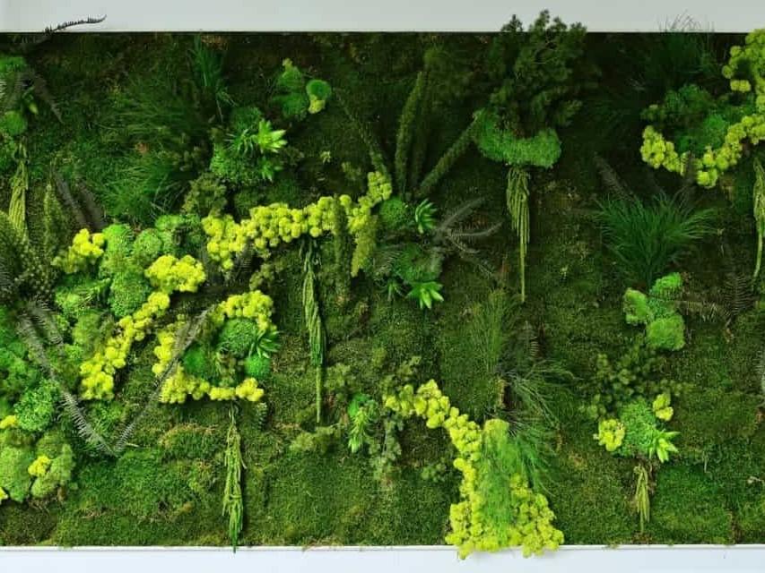 Tableau végétal - Green Decor