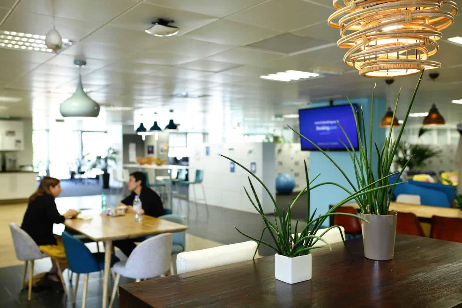 location de plantes vertes pour les bureaux à paris
