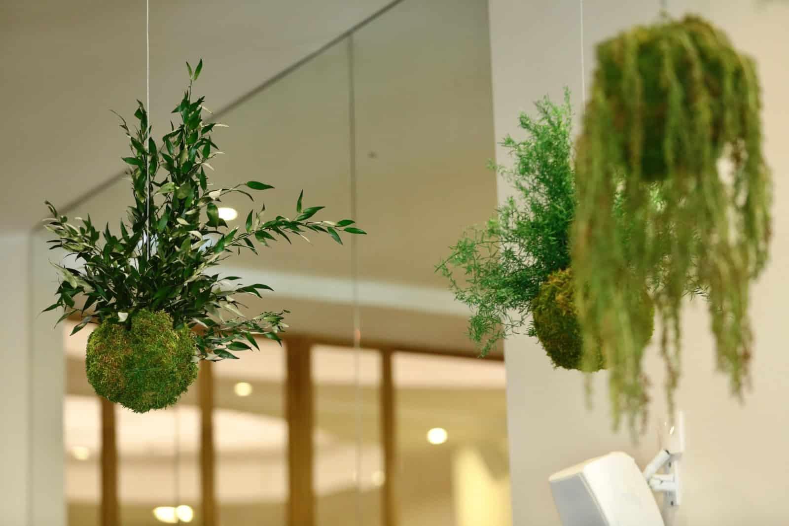 kokedama en entreprise : design végétal par Green Decor