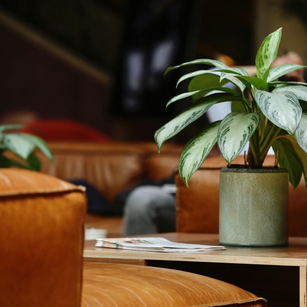 aménagement végétal par Green Decor Paris