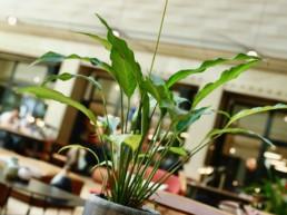 Location de plantes en entreprise avec contrat d'entretien à Paris et sa région