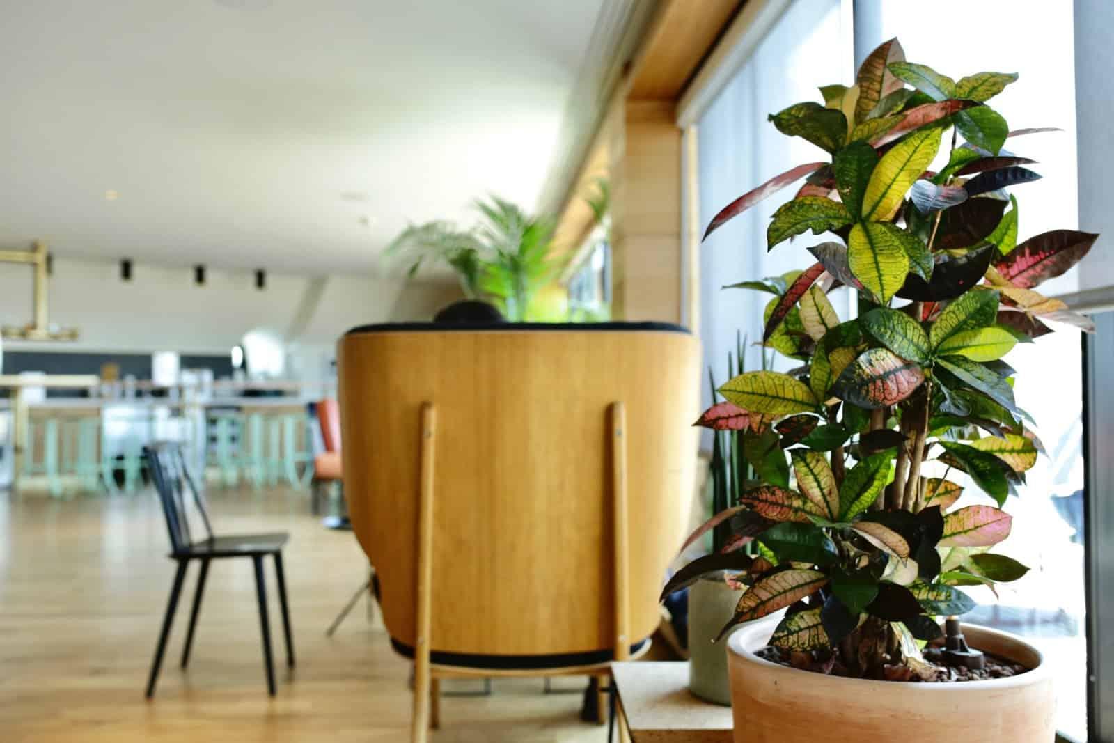 Aménagement et ajout de plantes vertes en entreprise : Green Decor Paris