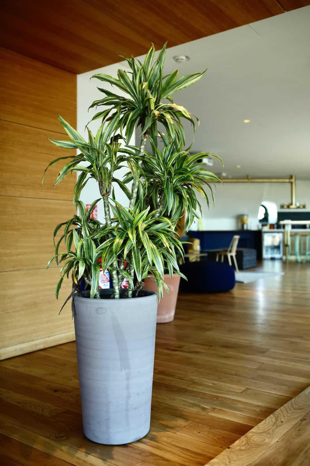 Location de plantes pour les bureaux de votre entreprise