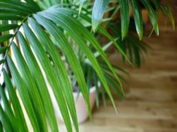 Location de plantes en entreprise par Green Decor