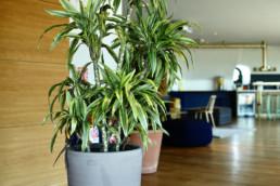 location de plantes vertes pour les entreprises par Green decor