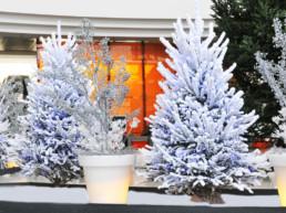 Sapins et décorations de Noël en entreprise et institutions par Green Decor
