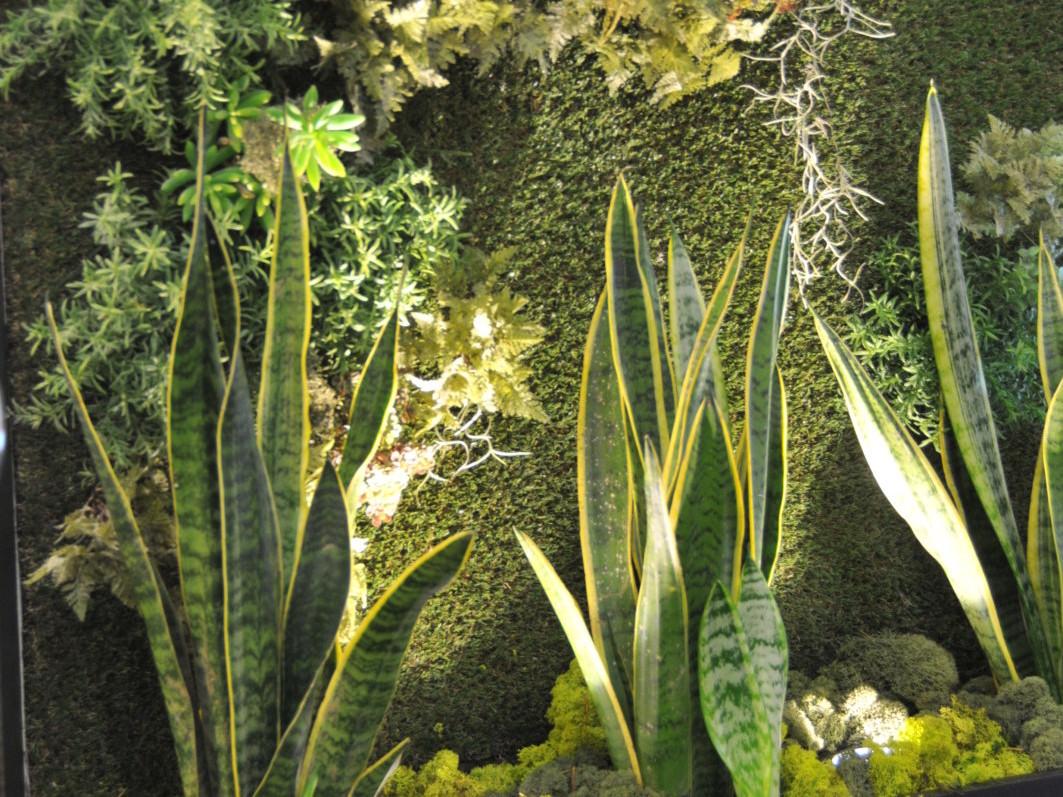 Création et design Végétal innovant