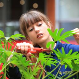 Entretien des plantes en entreprise Paris par Green Decor