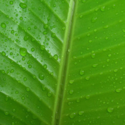 les bienfaits des plantes vertes par Green Decor