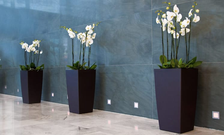 Design Végétal et location de plantes à Paris IDF pour les entreprises par Green Decor
